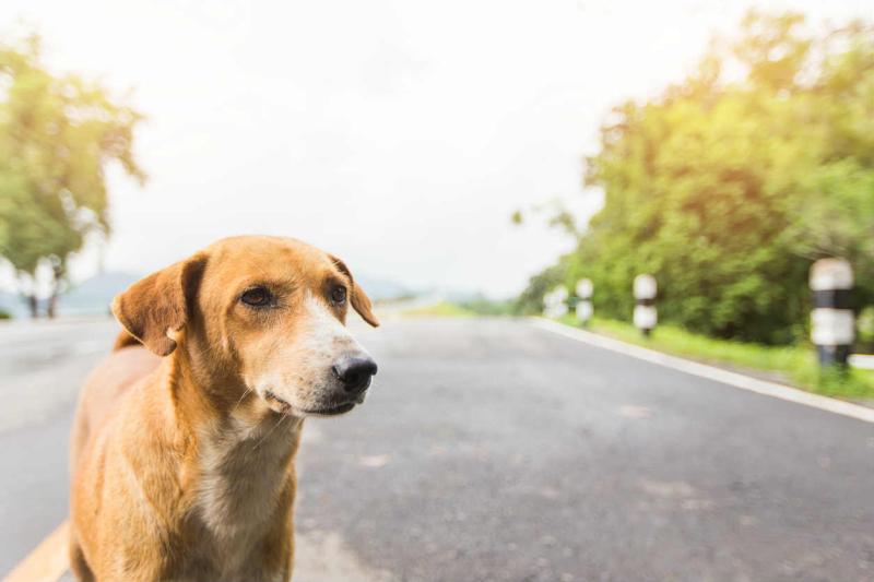 Dog-car-accident